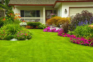 Outside Help: Use Your Landscaping to Boost Your Home's Efficiency