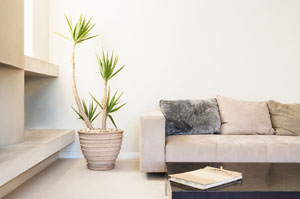 Detoxify Your Home With These 10 Plants
